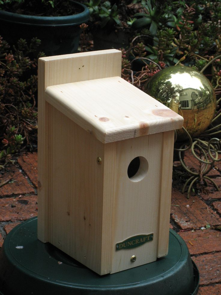Protect Your Bird House From Predators | Chickadees, Juncos, and ...