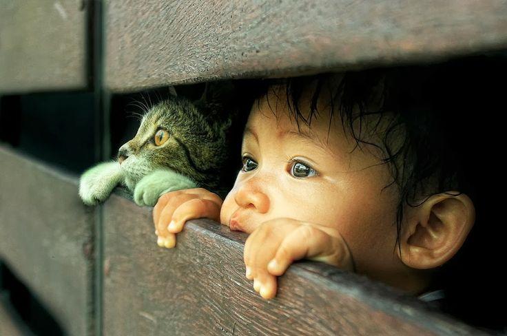 Un niño, un gato, dos curiosos En esta fotografía podemos ver a un gato y un niño de dieciséis meses observar a través de una valla con gra...