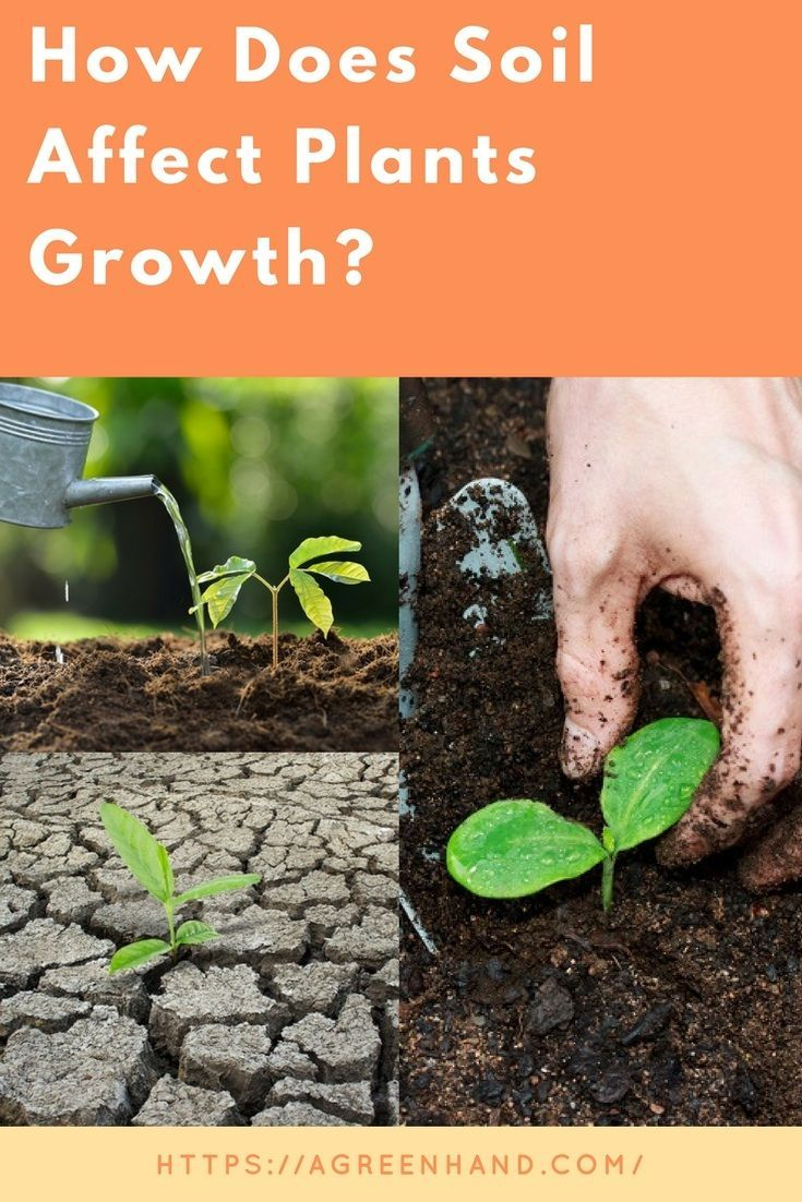 2fd35eefd8de7c10d4968ce971b3f854 - How Does Ph Affect Plant Growth And Gardeners Gardens