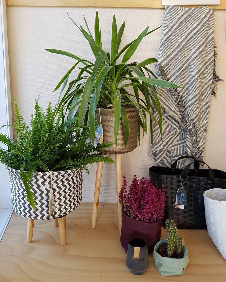 #handedby #anouskacolourfulliving #blanket #plants #homedecor #oohhcollection #uashmama #rippleway #nøtterøy #interiør #kurv #home #pledd #ull planter