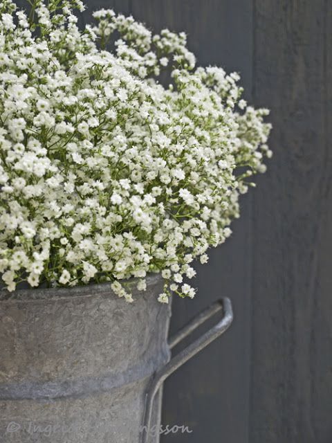 Gypsohila/Baby's Breath. Styling and photography © Ingrid Henningsson for Of Spring and Summer.