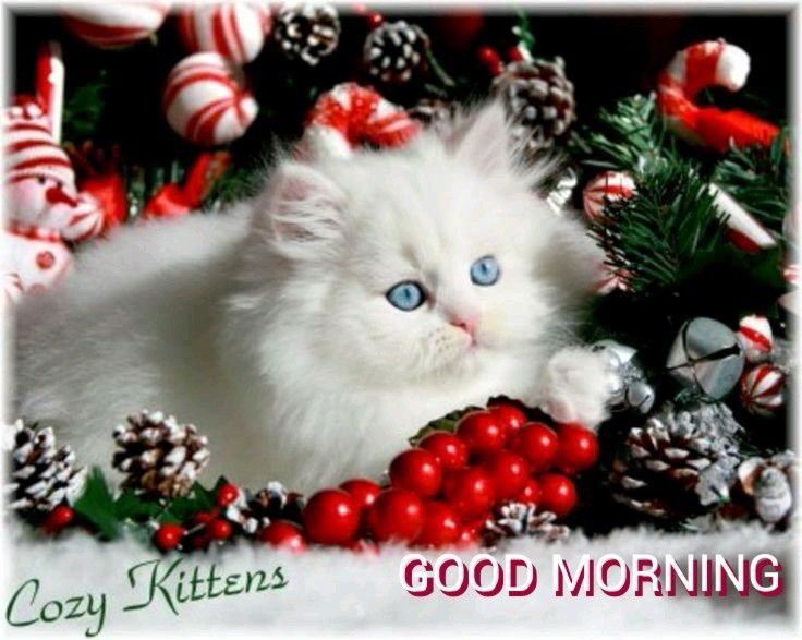 Good Morning Sister And All, Have A Lovely Day.keep Safe