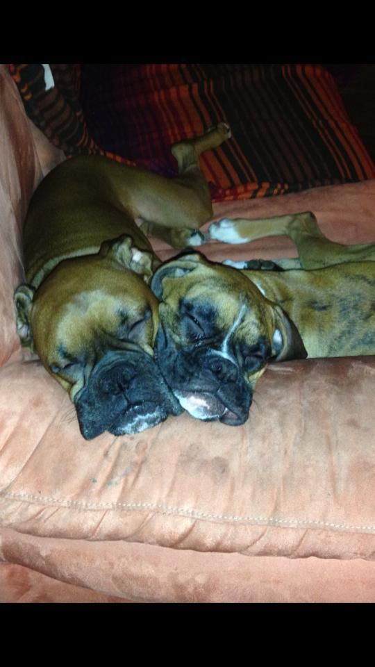 All time faves! | A community of Boxer lovers! We cuddly butts.