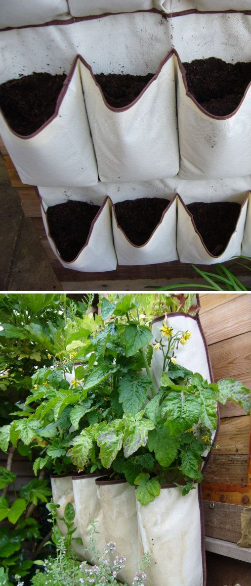 Best Apartment Vegetable Garden Ideas On Pinterest Growing