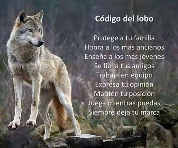 〽️ Código del lobo...                                                                                                                                                                                 Más