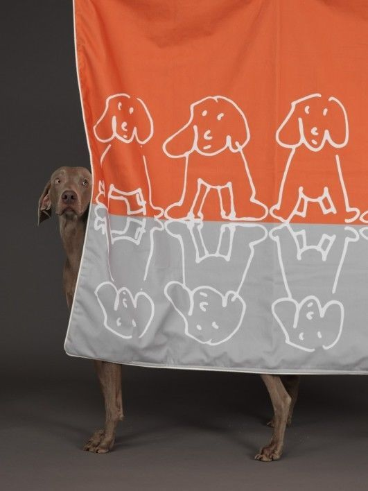 Weimaraner William Wegman Pup Up Orange/Gray Throver Weimaraner Rescue Charity
