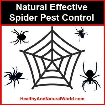 How to Make Natural Spider Spray Essential oils – Add up to 5 drops of essential oil and up to 5 drops of natural dish washing liquid to 1 qt. (1 l) of water. The following essential oils work well as spider repellents, especially citrus but also Tea tree, Lavender, Cinnamon, Mint , Neem, Peppermint, Spearmint and Citronella. Some people suggest to add vinegar to the mix