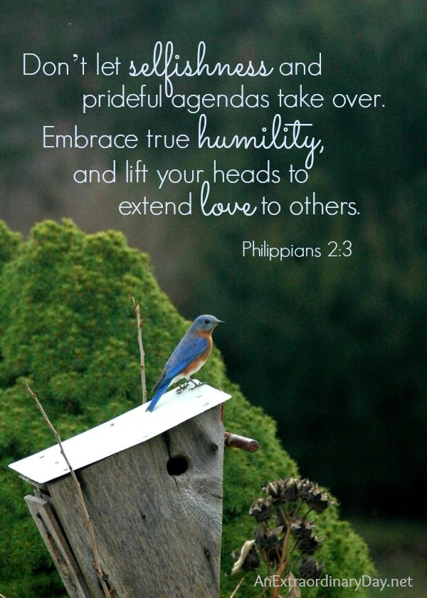 The Case of the Ruffled Feathers :: #Bluebirds :: Philippians 2:3 #ScriptureQuote #Printable :: AnExtraordinaryDay.net