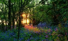 forests in england - Google Search