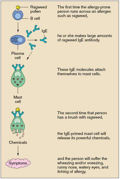 relationship between antigens and antibodies in blood