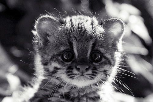 Cute animal pictures pinterest