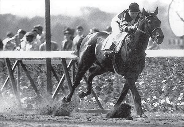the history of the kentucky derby horse race The kentucky derby would soon become a mainstay in horse racing heritage and history it is full of history, statistics, news, analysis and full information on this year's running of the kentucky derby churchill downs betting odds.