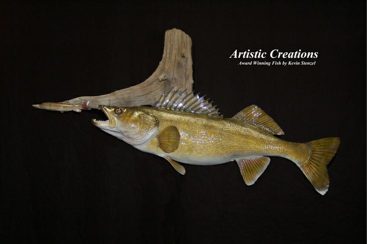 Larry Newbys Taxidermy - Home