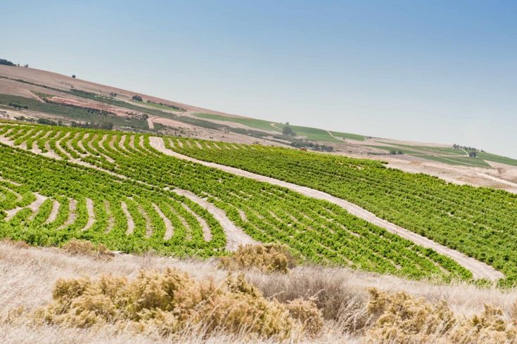 Amoskuil slopes in Swartland http://www.hospitalityhedonist.co.za/spice-route-paarl-wine-tasting-malabar/
