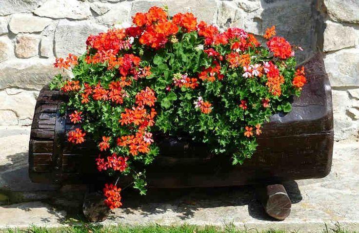 Si te gustaría, que tus plantas estén floreciendo mucho, puedes ayudarles a estar tan bonitas como tu quieras. El secreto de tanta belleza es muy simple: todo ser viviente necesita comer. Si la planta no se alimenta adecuadamente, nunca podrá lucir su exuberante follaje y hermosas flores.