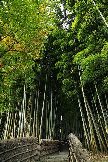 Kyoto - Arashiyama bamboo forest 京都-岚山竹林