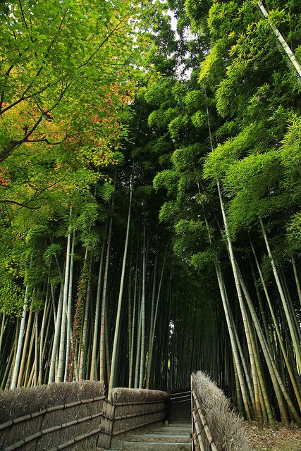 Arashiyama bamboo grove: Leave Tenryu-ji via the north gate and it takes you to the bamboo grove pretty seamlessly.