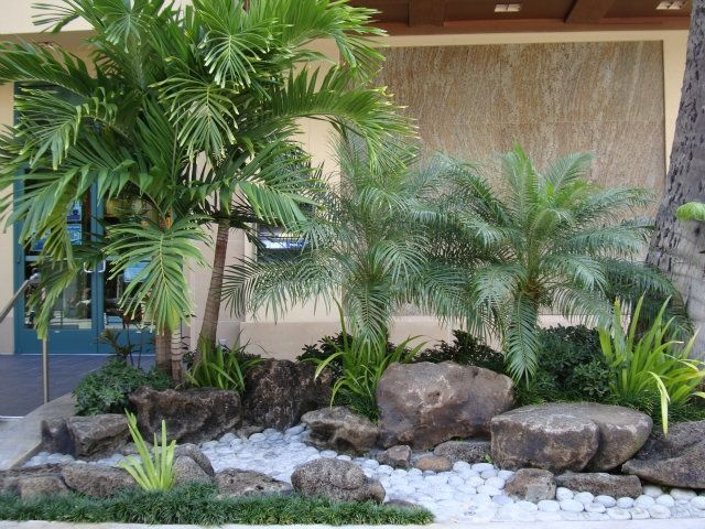 Sharon's plants: Manila palms, dwarf date palms, iris, dwarf pittosporum and mondo grass make this another low maintaince landscape. The landscaper used moss...
