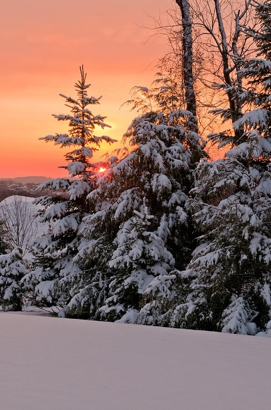 Look above the trees covered in snow, there, stands the beautiful sunset on the horizon, just for YOU.