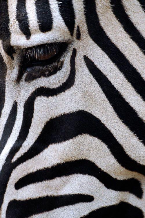 #Animals                                                                                                                                                                                 More