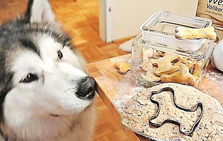 Leckerlis für Hunde selber backen