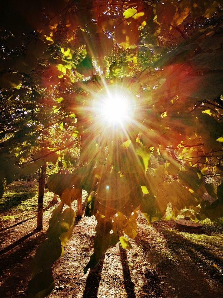Маам ру поделки осень фото ломай