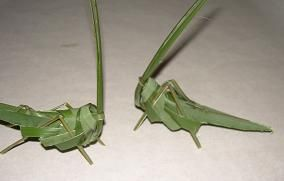 It is a grasshopper made out of a leaf - how cool is that!