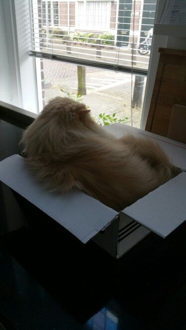 Looking outside.........to lazy to leave my box. #Beatleslove #lazycat #catinabox