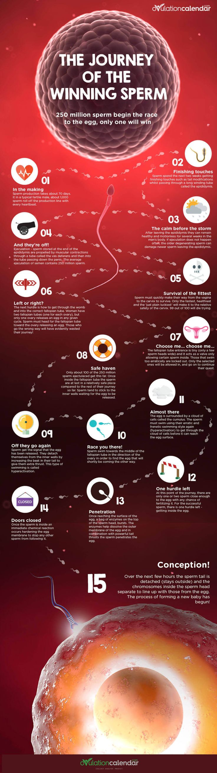 250 Million Attempt The Journey, But Only One Will Make It… #infographic #sperm #conception 1000+ sperm roll off the production line every heartbeat & 250 million leave the male body at ejaculation. It's a big race with only 1 penetrating the egg. An amazing infographic.