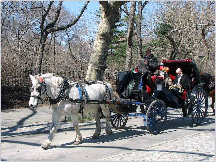central park horse and carriage ride a great way to see central park and hear great stories. Black Bedroom Furniture Sets. Home Design Ideas