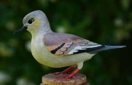Las Aves que Viven en Chile: TORTOLITA CUYANA