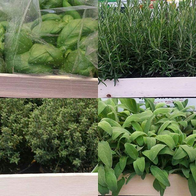 #boninifrutta  Scegli la #pianta #aromatica per insaporire al meglio i tuoi #piatti  #salvia #rosmarino #basilico #timo #green #vegan #food