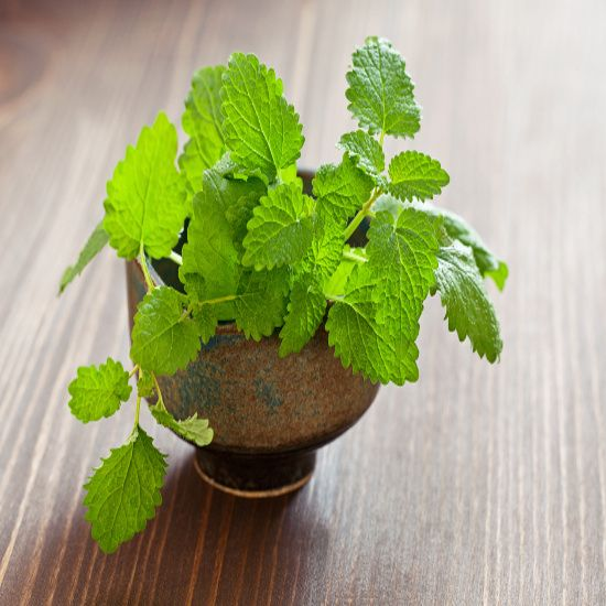 Herbal Herpes Remedies - Health and Wellness - Mother Earth Living
