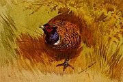 "New artwork for sale! - "" Thorburn Archibald A Cock Pheasant by Archibald Thorburn "" - http://ift.tt/2p8WEMQ"