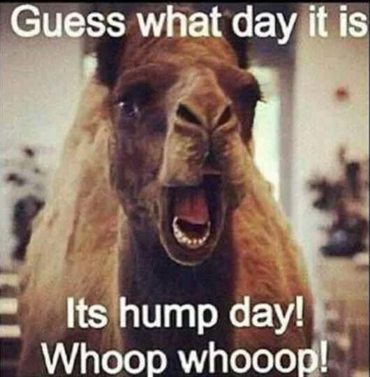 HUMP DAYYYYYYYYYYYYYYYYYYYYYYYYYYYYYYYYYYYYYYYYYYYYYYYYYYYYYYYYYYYYYYYYYYYYYYYYYYYYYYYYYYYYYYYYYYYYYYYYYYYYYYYYYYYYYYYYYYYYYYYYYYYYYYYYYYYYYYYYYYYYYYYYYYYYYYYYYYYYYYYYYYYYYYYYYYYYYYYYYYYYYYYYYYYY!!!!!!!!!!!!!!!!!!!!!!!