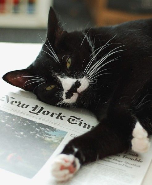 Moustachioed New York Sophisticate Kitteh lounges on The Times...