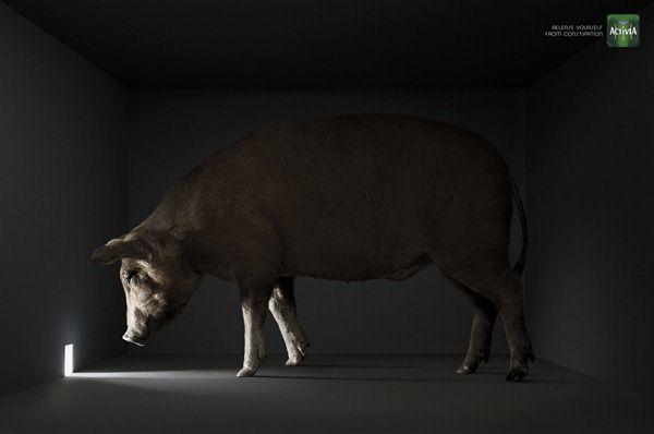 Activia__Sheep_Cow_publicidad_thumb [2]