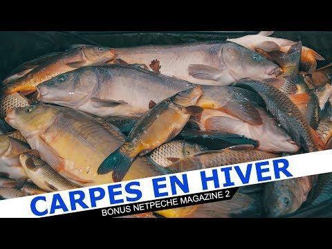 Pêche Carpe au Coup en hiver - trucs et astuces pour carpodrome  #astuces #carpe #carpodrome
