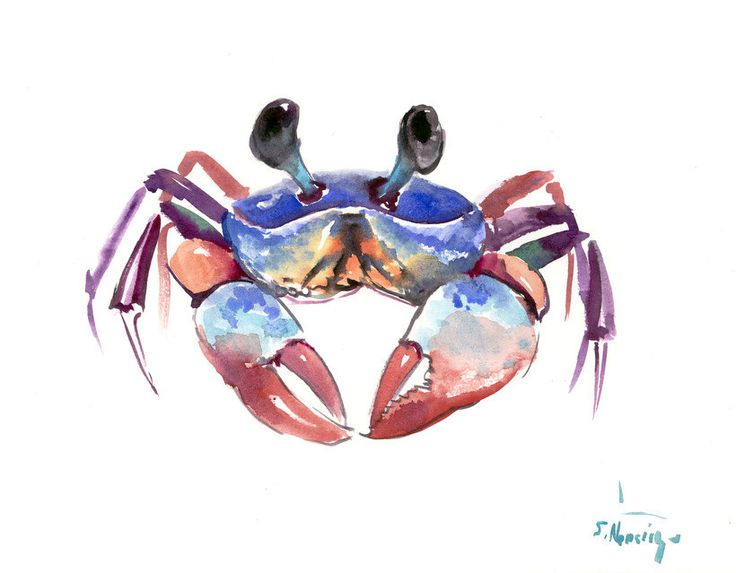 Crab, 12 X 9 in, original watercolor sea world animal art, crab painting, seafood, kitchen art, restaurant art, sea food, crab animals by ORIGINALONLY on Etsy