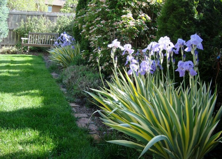 Garden Borders Inspiration : How to choose plants as landscape border ideas back fence