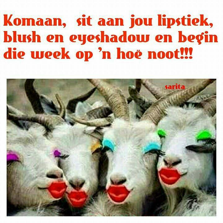 Komaan, sit aan jou Lipstick, ..... Maandag