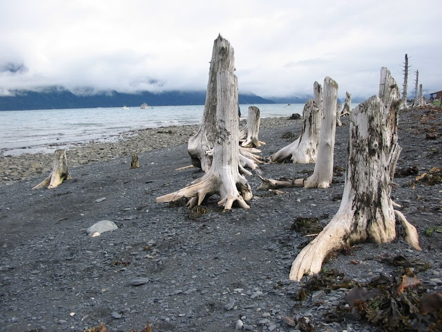 Alaskan shore