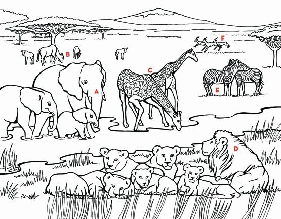 Animal Habitat Coloring Pages Luxury Grassland Animals Coloring Pages At Getcolorings Animal Coloring Pages Zoo Animal Coloring Pages Savanna Animals
