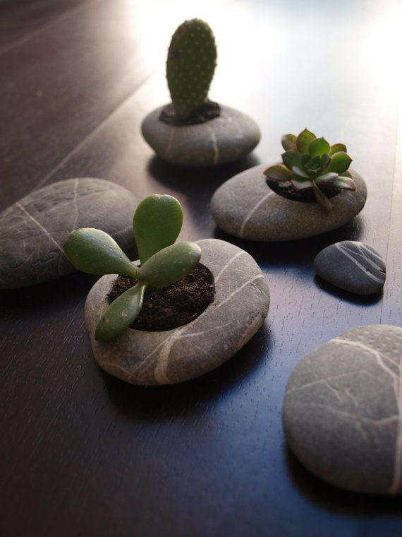 Carved out stones for mini planters. I imagine this is DIY-able. Pretty stone, meet Dremmel. Then add succulant.