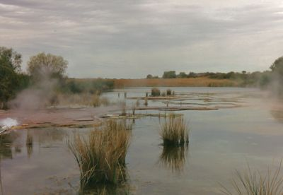 From Photos of some of our favourite places in Australia. Wetlands -Purnie Bore - Simpson Desert -1994