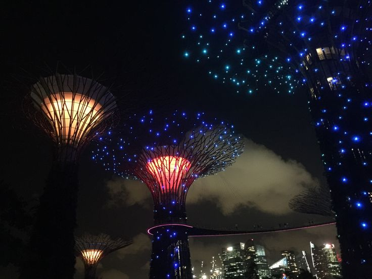 Twinkles lights on Super Trees at Gardens by The Bay