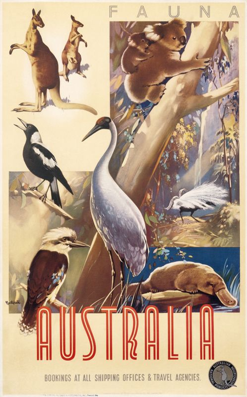 Vintage Travel Poster - Australia - Australia - Fauna - by James Northfield - c1935.