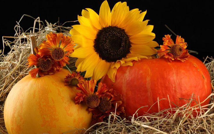 Fall Harvest Desktop Pics Wallpapers 3854 - Amazing Wallpaperz