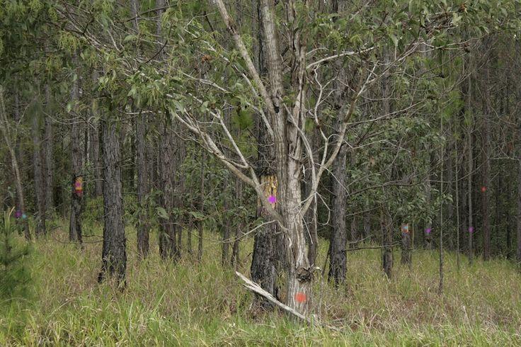 Janelle Evans - Dot on Trees I, 2012 - Digital print on aluminium, 40x30cm © The Artist