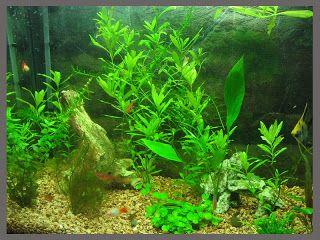 Terra e Mar Aquários: Como manter um aquário de peixes ornamentais, usando filtro biológico com bomba submersa.